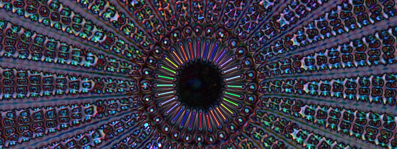 The diatom Arachnoidiscus. New type of birefringence image taken in one shot with polychromatic polscope. Colors represent orientation of birefringent structures. Credits: Michael Shribak